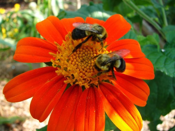 Flower with bees